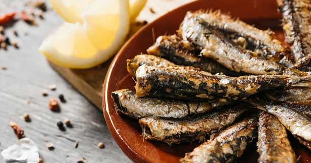 estres y alimentacion pescado